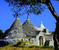 Trulli and olive trees, Alberobello